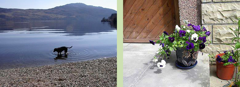 Our dog Rowan splashing in Loch Ness (left) - Violets at Tigh Na Bruach (right)